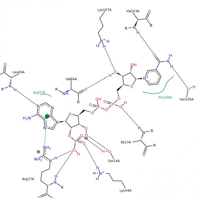 포도에서 안토시아닌을 만드는데 관여하는 DFR-B 효소의 결정 구조에서 촉매 활성 자리를 클로즈업한 이미지다. 효소 활성에 190번째 아미노산인 프롤린(Pro190A)이 중요하다. 나팔꽃 DFR-B에서는 195번째 아미노산인 프롤린이 여기에 해당하는데, 게놈편집으로 197번째 아미노산인 류신이 없어지면 배치가 틀어지면서 제 역할을 못하게 되는 것으로 보인다. - Acta Crystallographica 제공